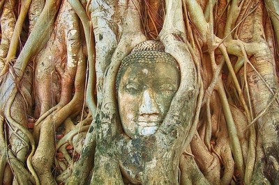 A Buddha Head Wrapped In The Roots Of A Banyan Tree
