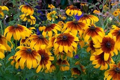 Flowers of Alcazar Garden