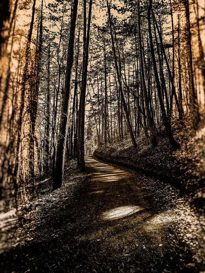 Baden Wood