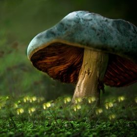 All mushrooms are edible, but some only once in a life time!