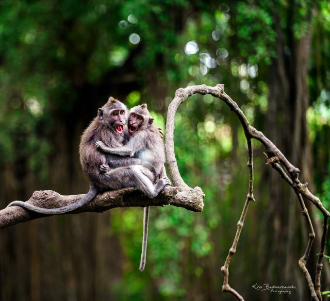 Photgrapher!! watch out! by krisbednarzewski - Wildlife Photo Contest 2017