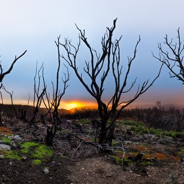 After a great fire storm in 2012 nature is comimg back. (La Gomera)