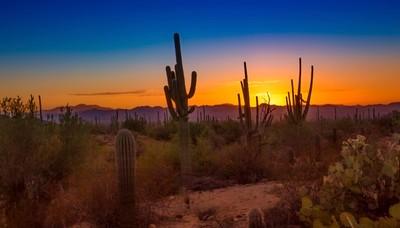 Sunset At Saguaro National Park West