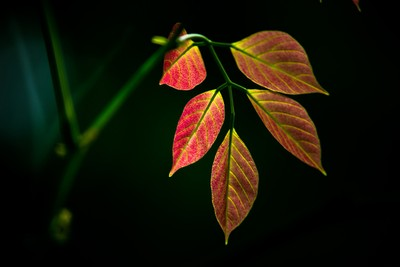 The Artistic Leaves ....