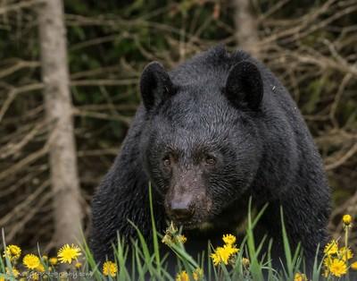 bear-5