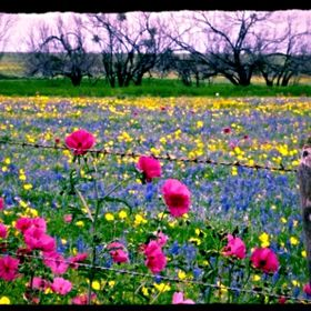 Most Beautiful Wildflower Field