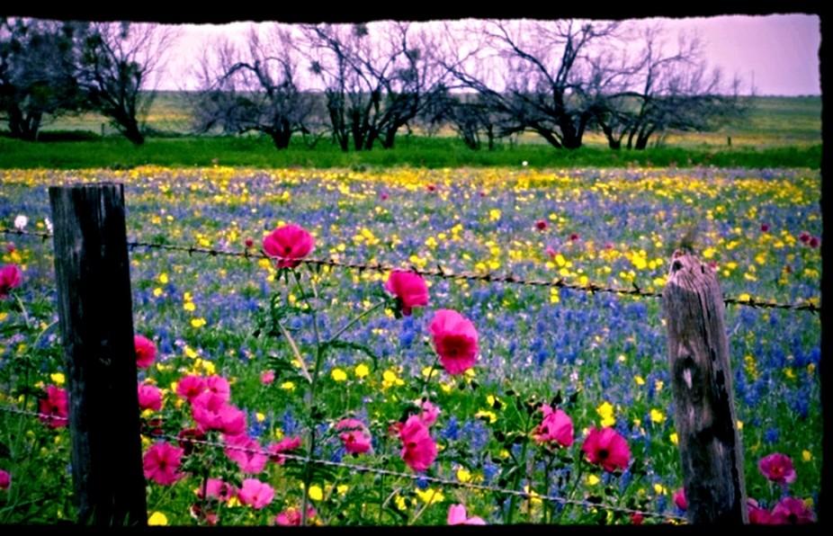 Most Beautiful Wildflower Field