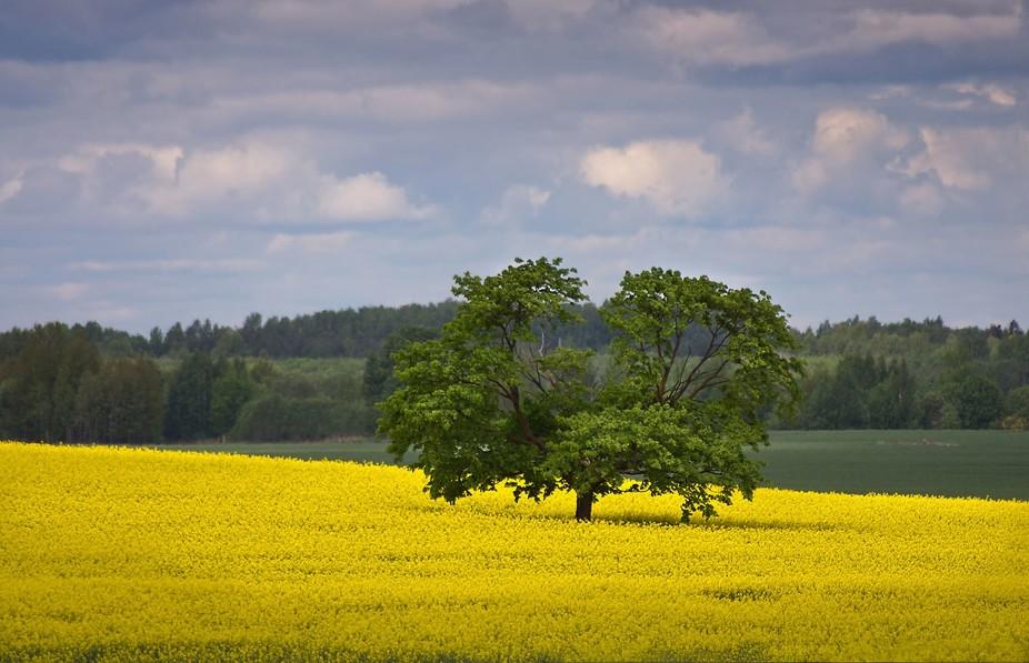 Spring fields...