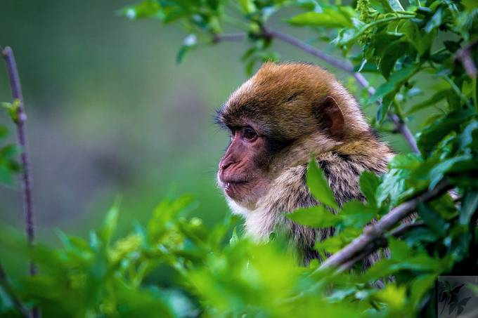 Barbary macaques by raven-black - Depth In Nature Photo Contest
