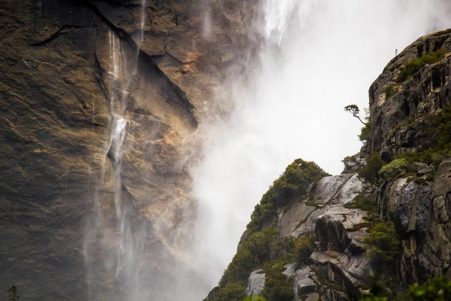Yosemite Falls, a lone tree