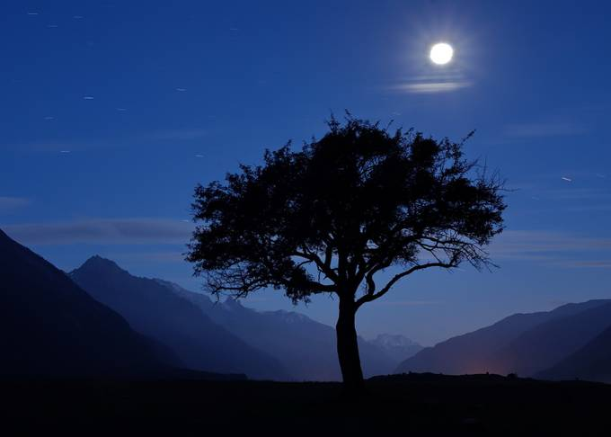 TWO LONELINESS by alarsen - Silhouettes Of Trees Photo Contest