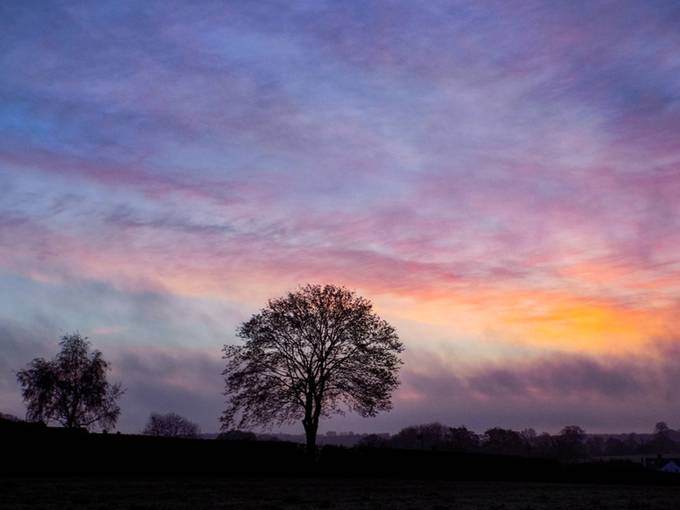 Tree at Sunrise by carlasears - Silhouettes Of Trees Photo Contest