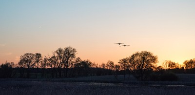 Sunset Geese (1 of 1)