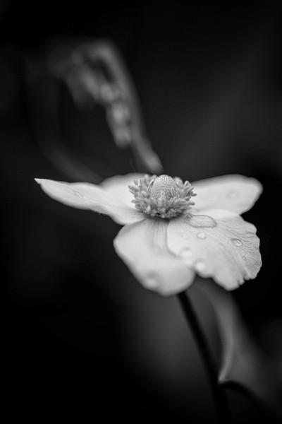 Flower VOL. XII