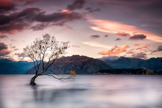 Stand Strong by paulkleynhans - A Lonely Tree Photo Contest