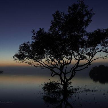 Silhoettes at Dawn