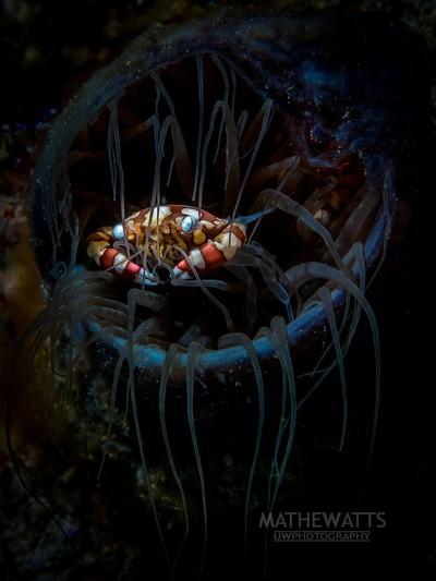 Tim Burton's Crab
