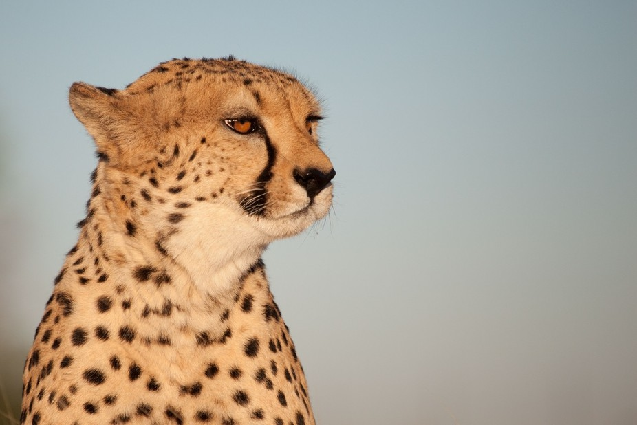 On a beatiful early morning in Namibia I had this wonderful and breath taking experience of a mee...