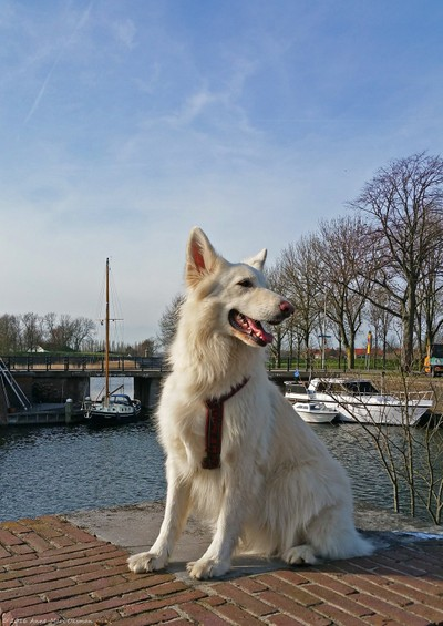 Guardian of the Lake on business trip in the Netherlands