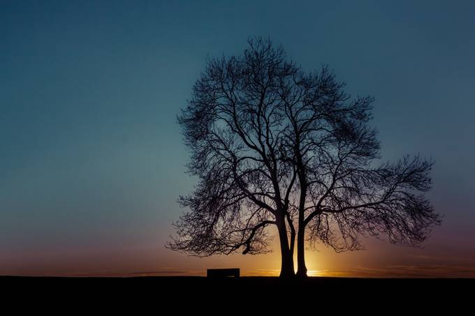At the end of the day by CPF_Photography - Silhouettes Of Trees Photo Contest