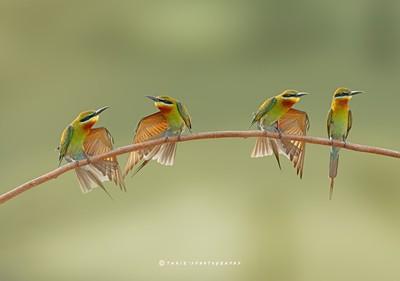 Birds fashion Week
