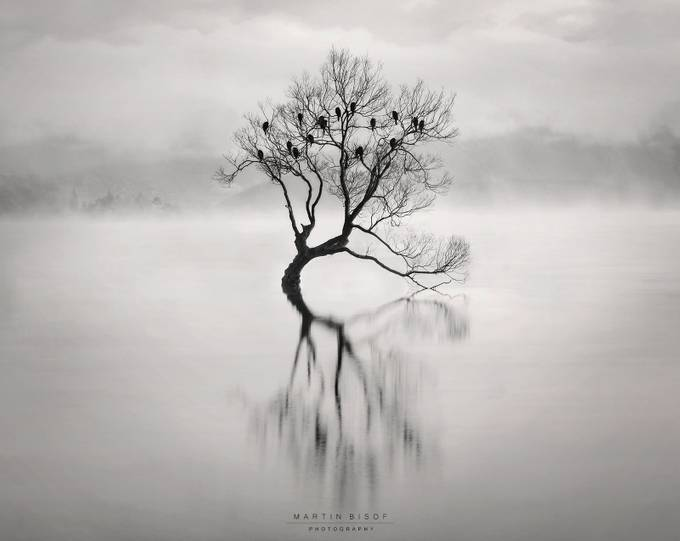 A clear vision by MartinBisof - Silhouettes Of Trees Photo Contest