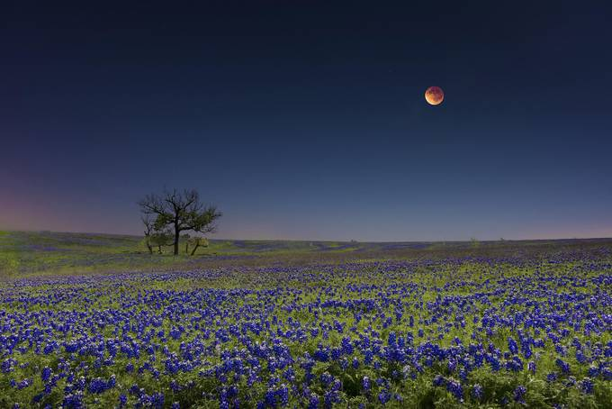 Blood Moon Over Bluebonnets by FalconEyesPhotography - Color In The Night Photo Contest