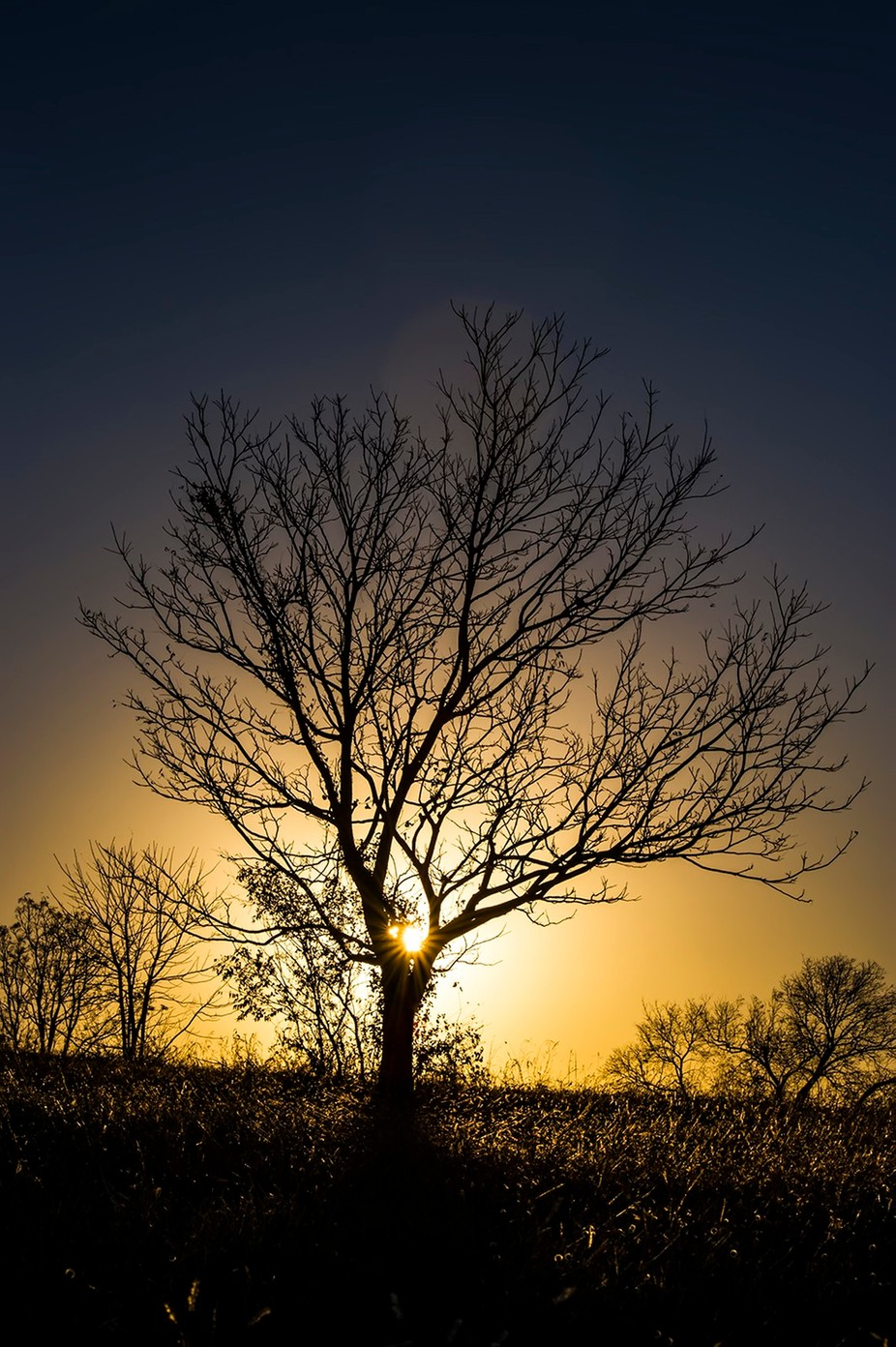 Silhouette of tree by gregblomberg - Silhouettes Of Trees Photo Contest