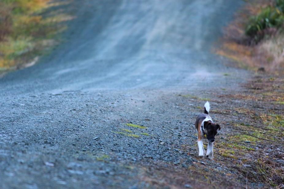 My amazing dog Winston.