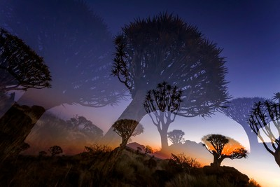 Quiver trees at night