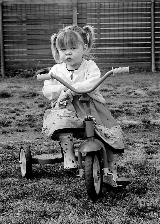 Brookie getting around grannies yard on her wheels,