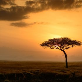 My safari trip to Kenyan was life changing. The mornings when the sun rose, the sky turned a golden color and the sun appeared as just an orb. Fo...
