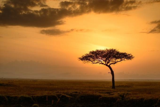 Iconic African Sunrise by kathrynsklenakdannay - A Lonely Tree Photo Contest