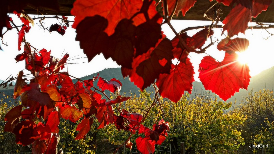As the sun rose I was able to capture these leaves with the sunlight highlighting the colours and...