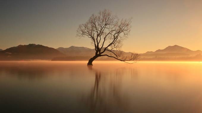 That Lone Tree by jomyjose - Silhouettes Of Trees Photo Contest