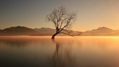 That Lone Tree