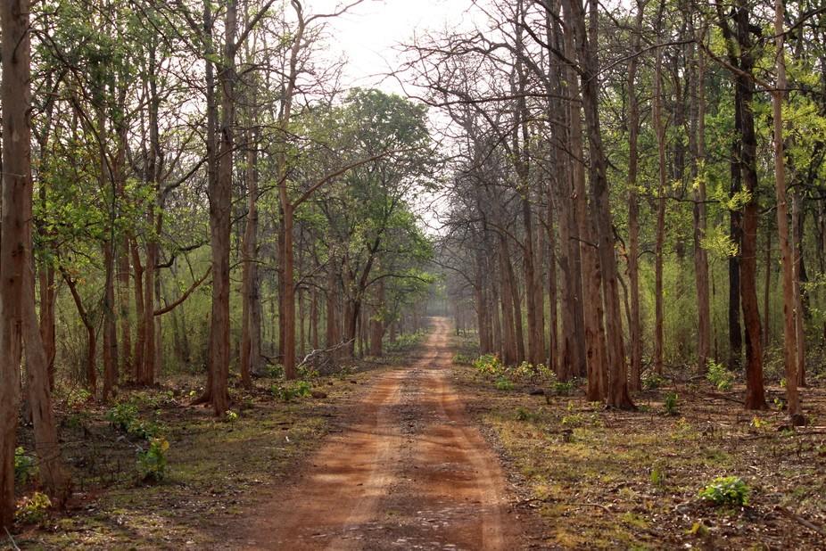 clicked inside the tadoba andheri tiger reserve near chandrapur,Maharashtra,India.