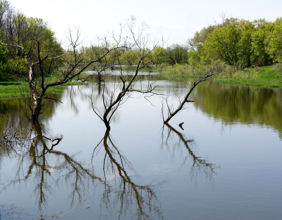 Forest preserve in Northern Illinois. Trees seem to point the way with the aid of the water.
