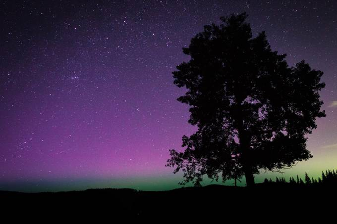 IMG_7547 by brandongill_6246 - Silhouettes Of Trees Photo Contest