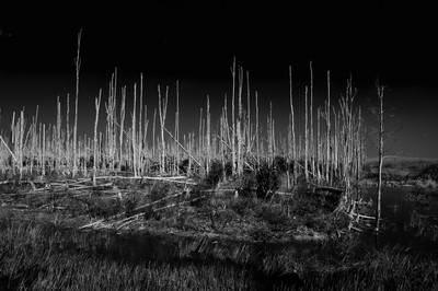 Everglades Dead