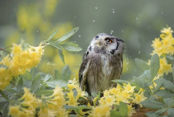 Rainy days by tanjabrandt - Animals And Rule Of Thirds Photo Contest