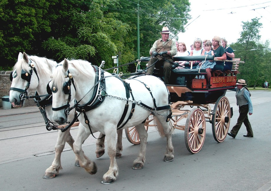 Cart ride 1