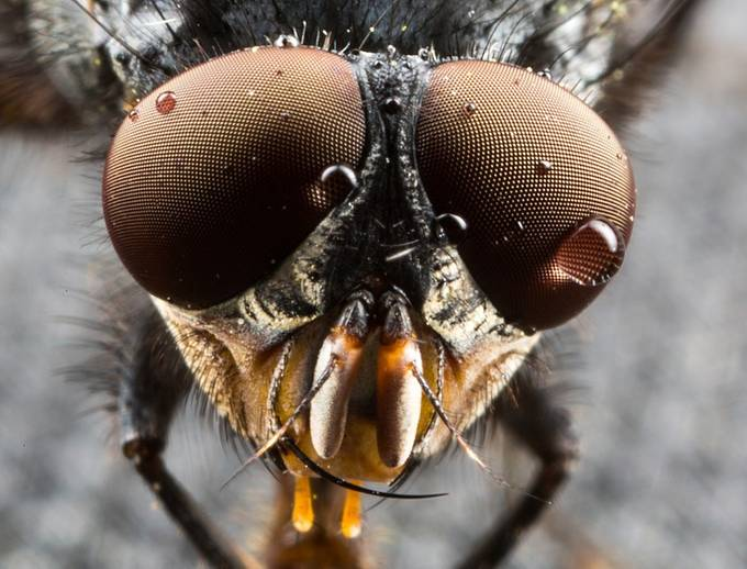 Fly with water in it's eye by ChrisIS - Macro Water Drops Photo Contest