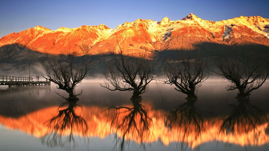 Glenorchy - Old willows on the edge of Lake Wakatipu, Queenstown, Glenorchy