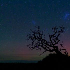 An old dead tree silhouetted by Aurora Australis
