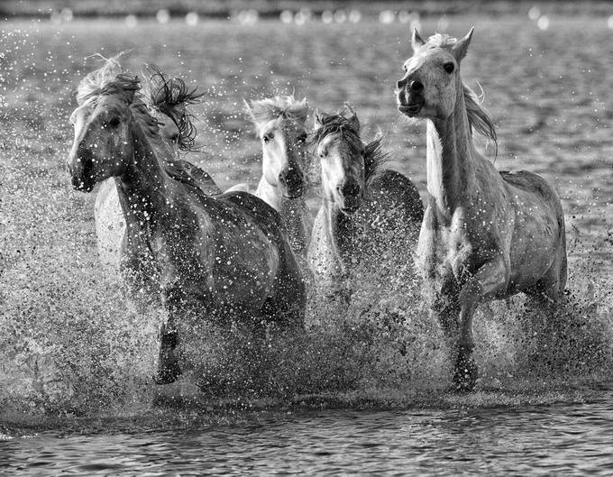 Camargue-white and black by DebColeman - Get Wet Photo Contest