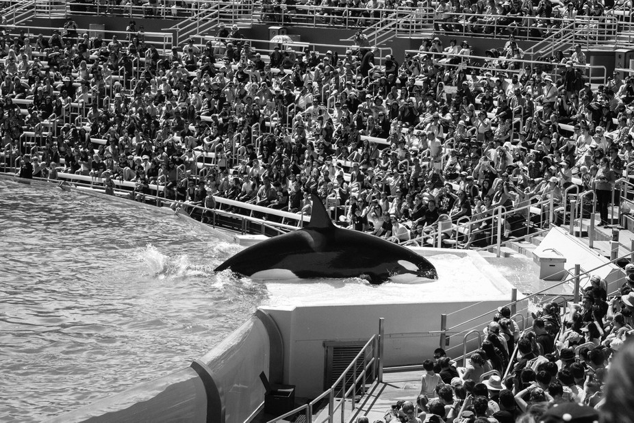 Through the documentation of animals in captivity such as in zoos, pet stores, slaughterhouses, a...