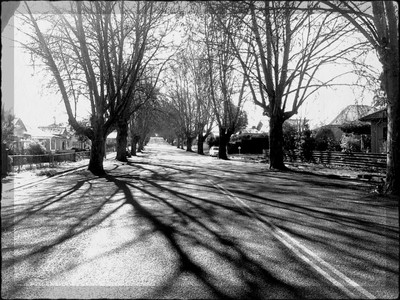 'Tree-Lined Street in Winter'