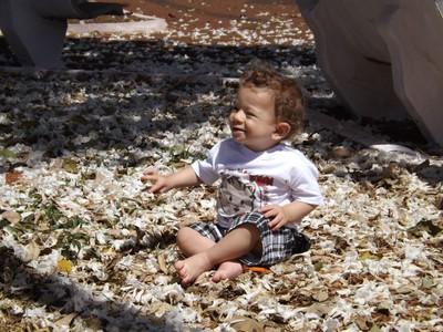 Criança sobre flores de ipê branco (Child on white ipe flowers).