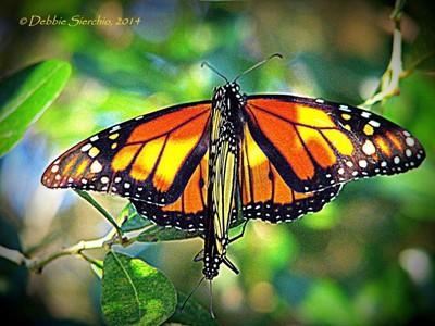 Mating Monarchs_3789